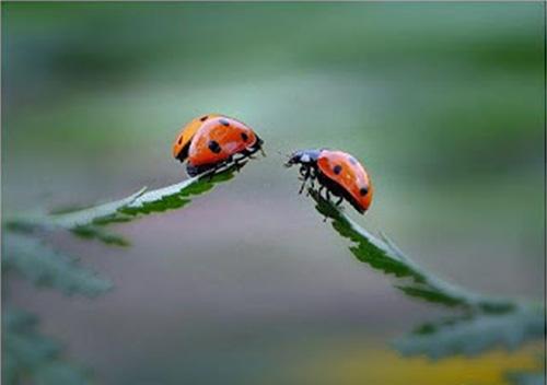Se as 'joaninhas' (sonhos) tentam se unir e não conseguem... É saudável que retornem e refaçam seu caminho, individualmente